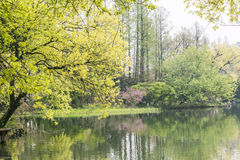 The lakeside green trees Royalty Free Stock Photos