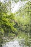 The lakeside green trees Stock Photos