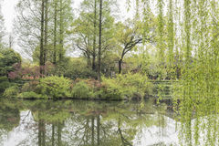 The lakeside green trees Stock Photo