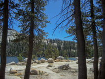 Lakeside from Grove of Pines Stock Image