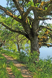 Lakeside Hiking Trail Under Oak Tree. This photo was taken midday along a lakeside trail with filtered sunlight coming through oak trees Royalty Free Stock Photo