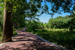 Lakeside meandering blacktop in shade of trees on sunny summer d Royalty Free Stock Images