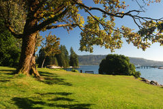 lakeside park obraz royalty free