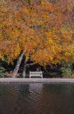 Lakeside park bench underneath autumn tree Stock Photo