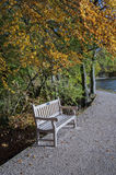 Lakeside park bench underneath autumn tree Stock Image