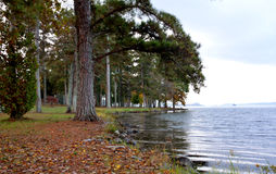 Lakeside at a Park Royalty Free Stock Photos