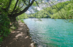 Lakeside Path. Plitvice. Path by a lake in Plitvice, Croatia. The water is so clean a fish that can be seen Royalty Free Stock Photos