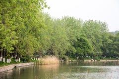 Lakeside Royalty Free Stock Photography