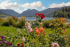 Lakeside promenade schliersee with beautiful blooming rose flowe. Lakeside promenade schliersee, with beautiful blooming roses and flowerbed, bavarian landscape royalty free stock images
