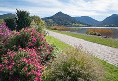 Lakeside promenade schliersee with colorful flowerbed. Lakeside promenade lake schliersee with colorful flowerbed. pink autumn aster and decorative grass stock photos