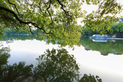 Lakeside reflection Royalty Free Stock Photos