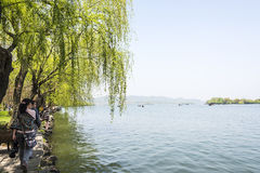 lakeside sidewalk and green willow Stock Photography