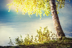 Lakeside in sun. A lakeside with a birch tree in the summer sun Royalty Free Stock Photography