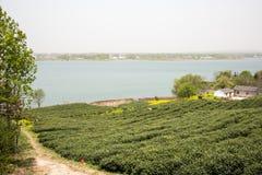 Lakeside Tea plantation Stock Images
