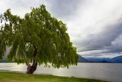Lakeside Tree Royalty Free Stock Images