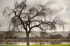 Lakeside tree and a bench in Winter. Royalty Free Stock Photo