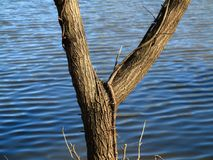 Lakeside Tree and Blue Water Stock Photography