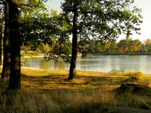 Lakeside with trees Royalty Free Stock Photo