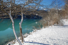 Lakeside Trees in Snow, Friuli Stock Photos