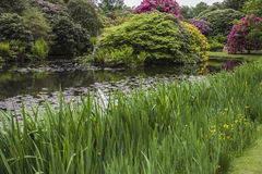 Lakeside view  at Biddulph Grange, Stoke, Engalnd Royalty Free Stock Images