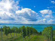 Lakeside vineyard Royalty Free Stock Image