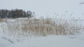 Lakeside winter landscape. The Lakeside white winter landscape stock video footage