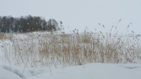 Lakeside winter landscape panorama. Lakeside white winter landscape panorama stock footage