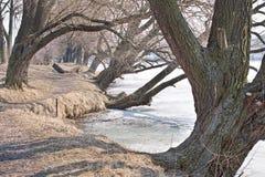 lakeside Wiosna zdjęcia royalty free
