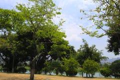 Lakeside woods Stock Image