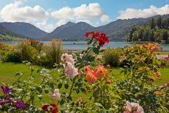 Lakesidepromenadschliersee med härlig blomma rosa flowe Royaltyfria Bilder