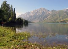 lakesidetree Arkivfoto