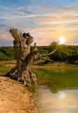 laketree Arkivfoton