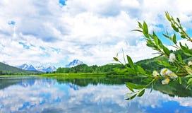 Lakeview des großartigen Nationalparks Teton Stockbilder