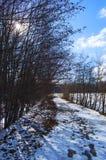 Lakeview-Gehweg stockbilder
