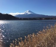 Lakeview of Mount Fuji royalty free stock images