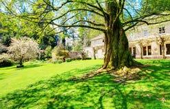 Lakewood庭院 与扭转根的大老树 库存图片