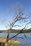 Lakr Baroon Reservoir. View of a dead tree by Lake Baroon Dam in the Sunshine Coast interland, Queensland, Australia Royalty Free Stock Photography