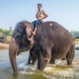 Lakshmi, der Tempelelefant und ihr Wächter Stockfotos
