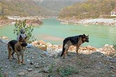 LAKSMAN JHULA, ΙΝΔΊΑ - 13 ΑΠΡΙΛΊΟΥ 2017: Συνεδρίαση ατόμων με τα σκυλιά του στον ποταμό Γάγκης στην Ινδία Στοκ εικόνα με δικαίωμα ελεύθερης χρήσης