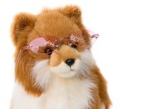 Lal Psi jest ubranym szkła na białym tle Zdjęcia Royalty Free