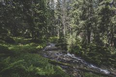 Lala stream and coniferous forest. At the base of Ineu Peak Stock Photography