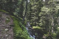 Lala stream and coniferous forest. At the base of Ineu Peak Royalty Free Stock Image