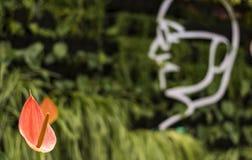 Lalbagh blomsterutställning Januari 2019 - hedersgåva till Mahatma Gandhi arkivbild