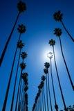 LALos Angeles palmträd i rad typiska Kalifornien arkivbild