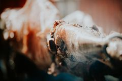 Lam op vleespen aan perfectie wordt geroosterd die hete houtskool gebruiken die royalty-vrije stock afbeeldingen