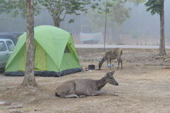 Lam ta khong camping ground in thailand Stock Photo