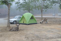 Lam ta khong camping ground in thailand Stock Photography