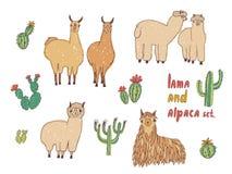 Lama, alpaga mignon et cactus réglés Illustration colorée tirée par la main de vecteur Image stock
