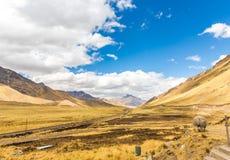 Lama, alpaga radunante strada Cusco- Puno, Perù, Sudamerica. Valle sacra delle inche. Natura spettacolare delle montagne Immagine Stock Libera da Diritti