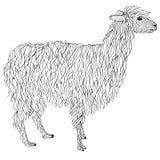 Lama, Alpakahand gezeichnet Gegenstand auf Weiß Lizenzfreie Stockfotos